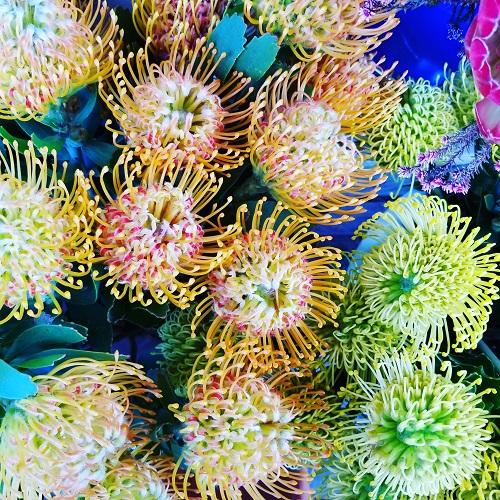 見たことがない色のお花
