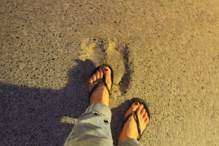 ラクダの足跡