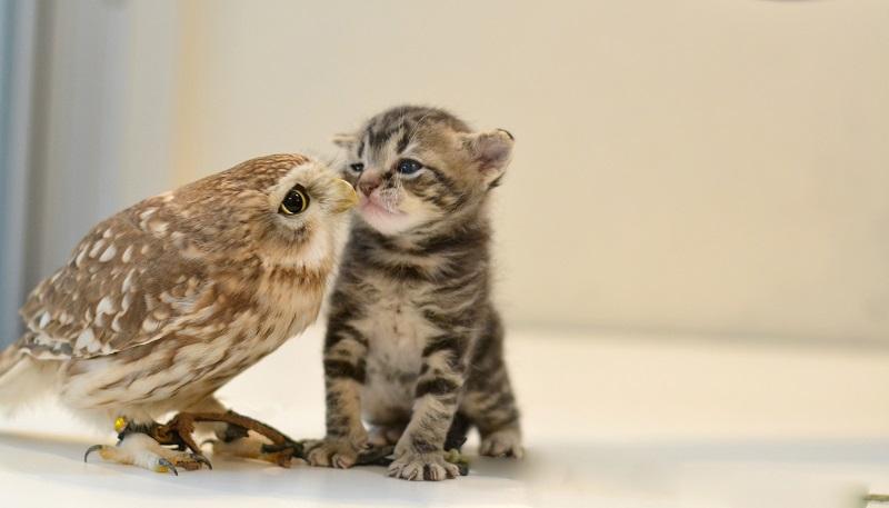 子猫 フクロウ