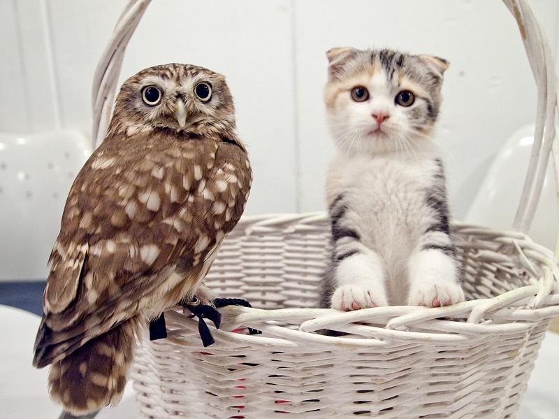 フクロウ 子猫