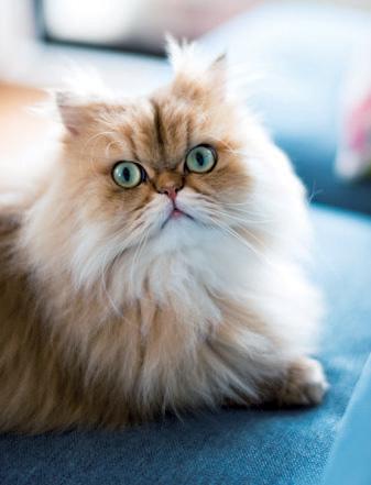 猫のしー太