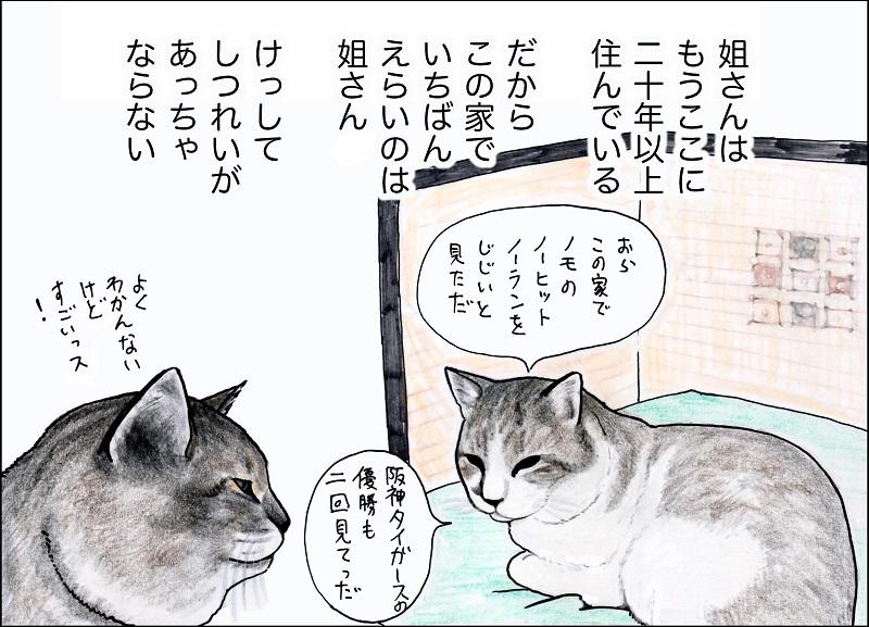 猫漫画『俺、つしま』