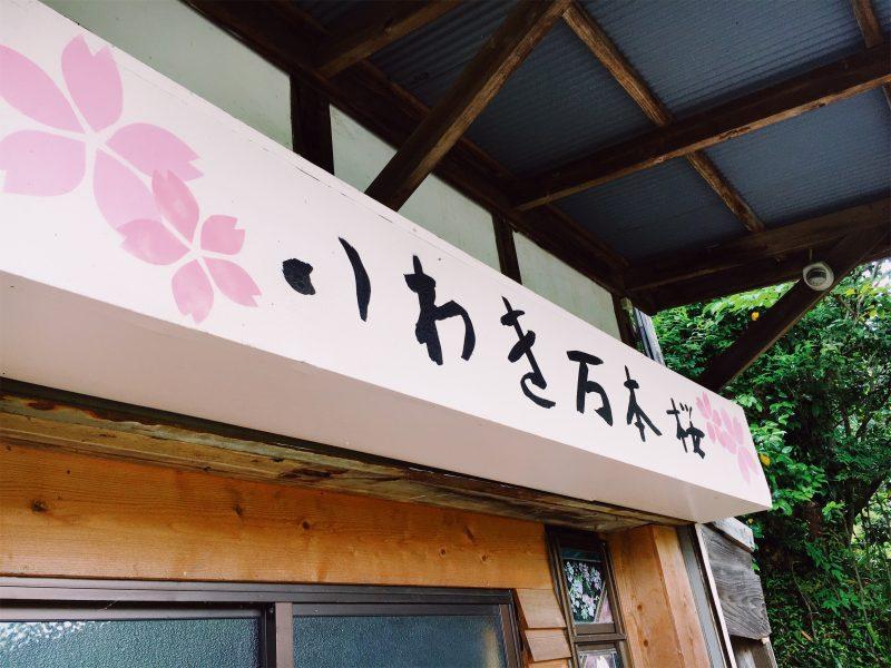 万本桜プロジェクト
