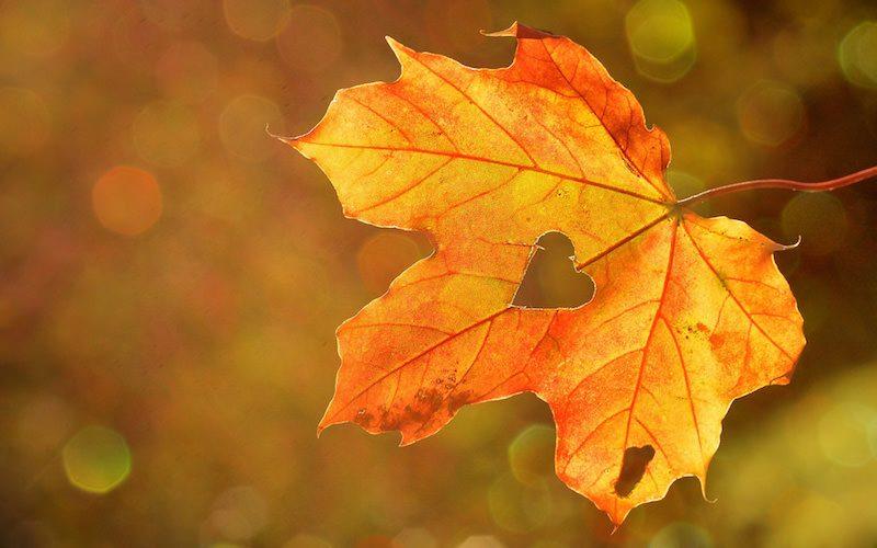 なんだか物悲しい…秋のプチうつ...