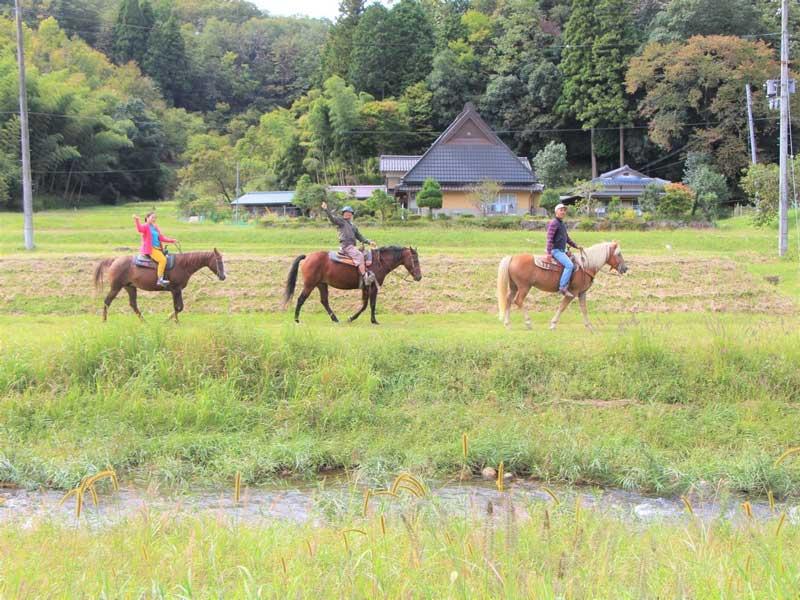 兵庫|レッスン&60分乗馬