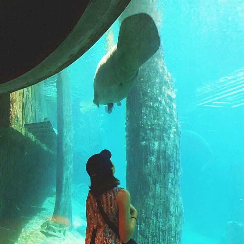 水槽で泳ぐ魚たち