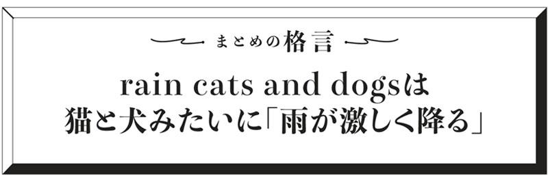 まとめ格言 rain cats and dogsは猫と犬みたいに「雨が激しく降る」