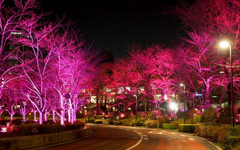さくら通りもライトアップでピンク色に