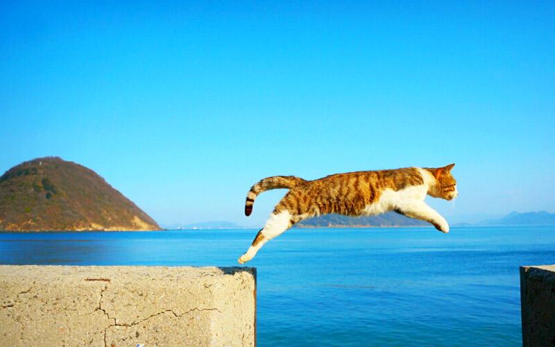 猫島 撮影スポット
