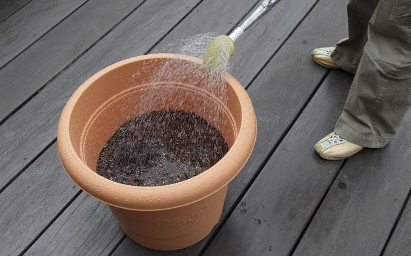 苗植えの手順