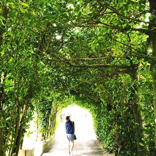 沖縄 備瀬(びせ)のフクギ並木