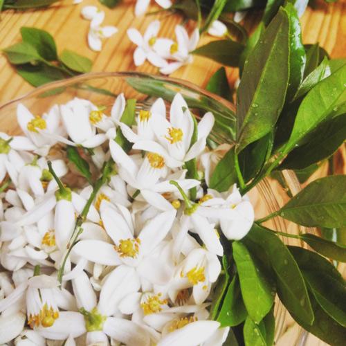 D'S aromatherapy|トゥシュ・マ・ポー problem W