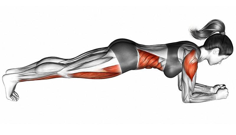 引き締まった体幹をつくるプランク