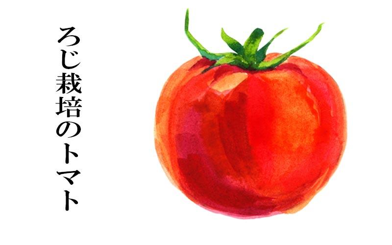 ろじ栽培のトマト