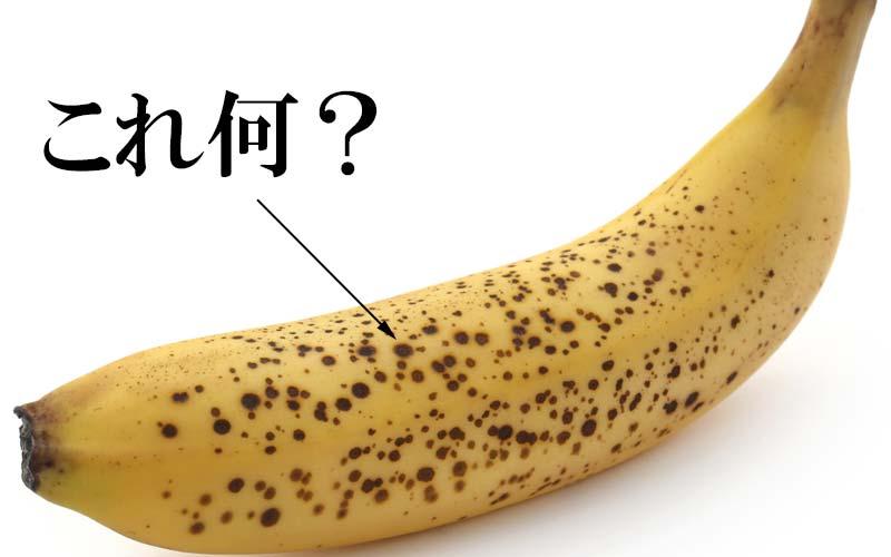 バナナの皮に「黒い斑点」これ何?