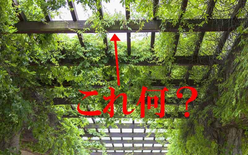 植物が絡まった屋根のようなもの、これ何?