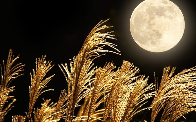 2021年の十五夜はいつ? 由来や食べ物を含めた習わしまでご紹介 | Oggi.jp | Oggi.jp