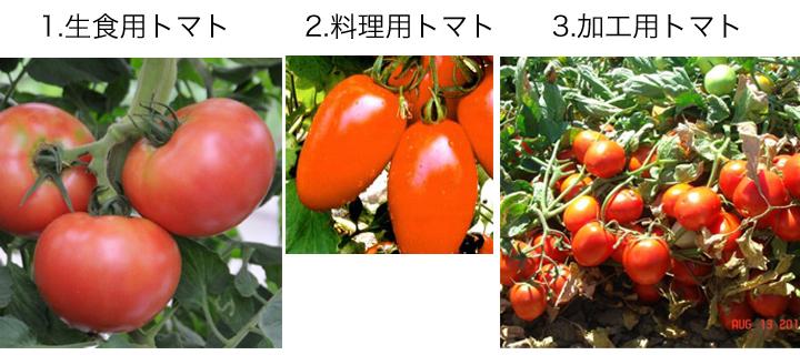 最もリコピンが多く含まれているトマトの種類