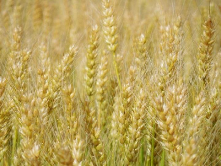 小麦粉を抜くこと